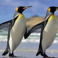 pinguini-gay-4-200x200.jpg